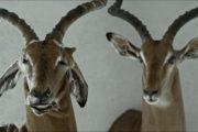 """""""Animus Animalis"""" stebuklai"""